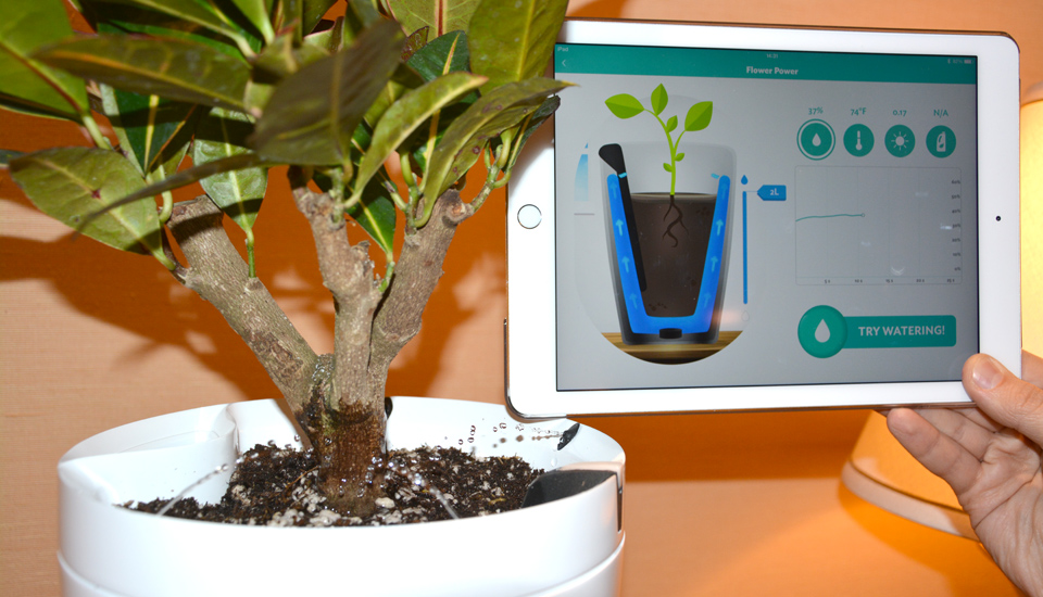 Parrot's Plant watering device